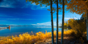 Trees at the lakeside in Tahoe City